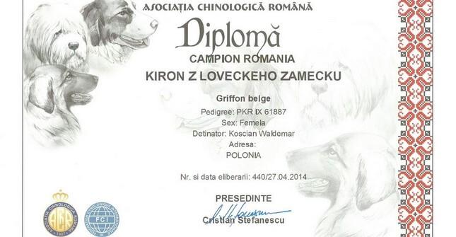 Gryfonik belgijski - Championat Rumunii