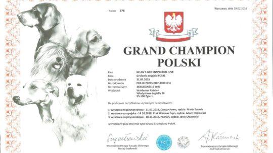 Gryfonik belgijski Lowa Grand Champion Polski