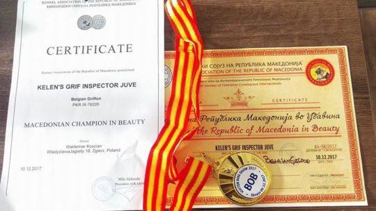 Gryfonik belgijski Lowa -Championem Macedonii i Interchampionem