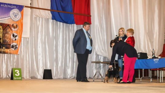 Gryfonik belgijski Lowa - Championem Rosji i Championem RKF