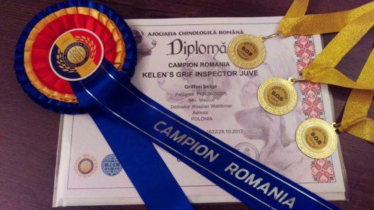Gryfonik belgijski Lowa - Champion Rumuni