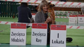 Gryfonik brukselski Hanka - CWC Nowy Dwór Mazowiecki