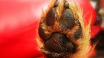 Obcinanie pazurów u psa